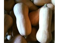 Our delicious local butternut squash